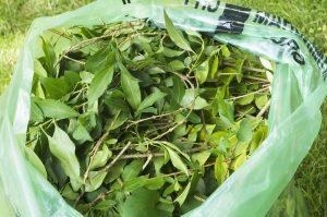 Sacs pour matières compostables